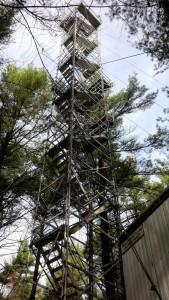CA-TP4: ON-Turkey Point 1939 White Pine