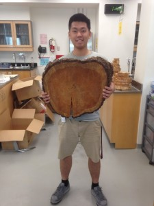 Tree ring disc