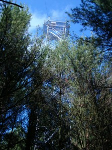 Tower at CA-TP3 site